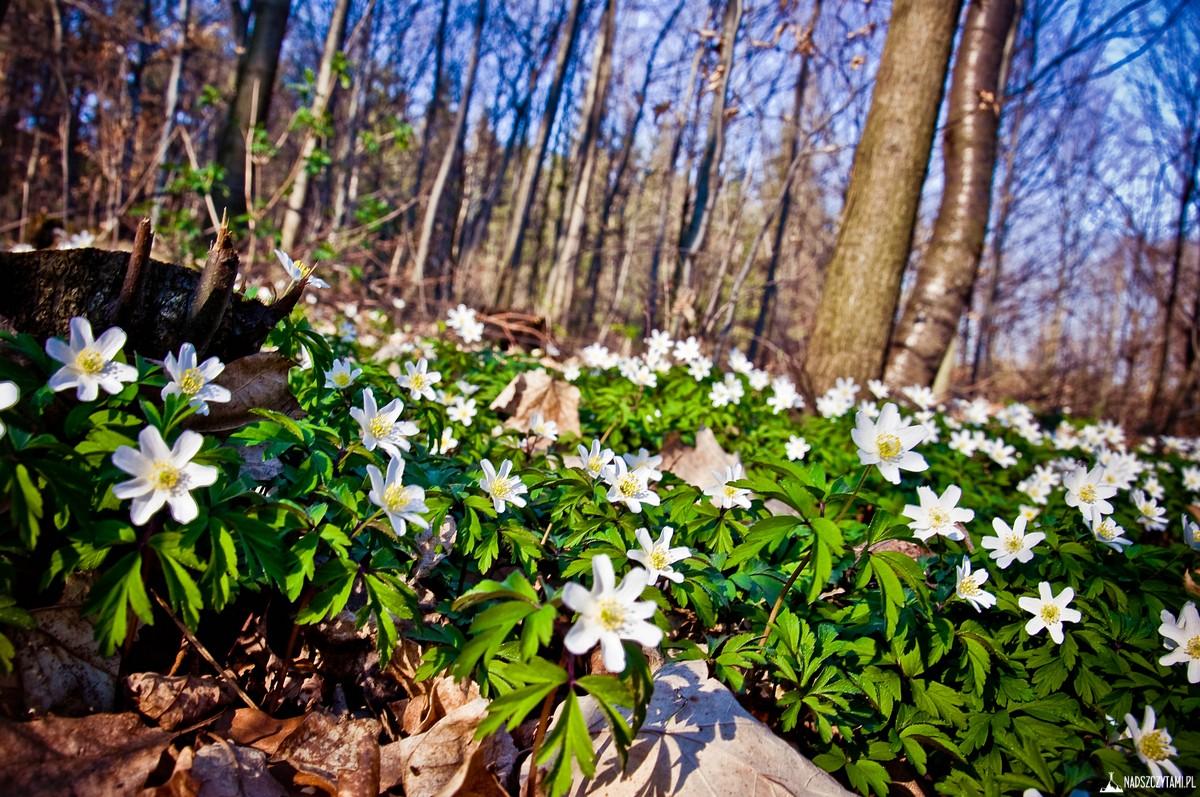 Wiosna na Ślęży