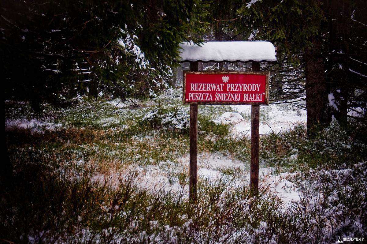 Rudawiec rezerwat Puszcza Śnieżnej Białki
