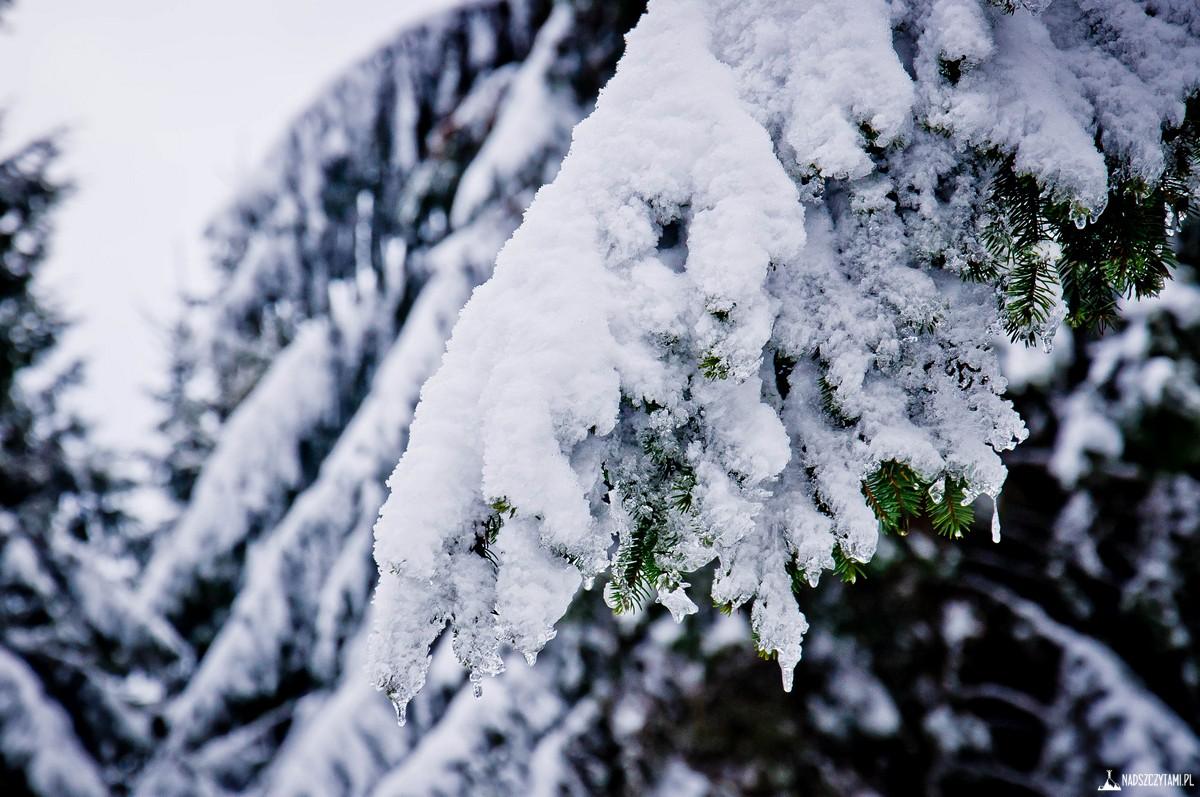 Śnieżnik