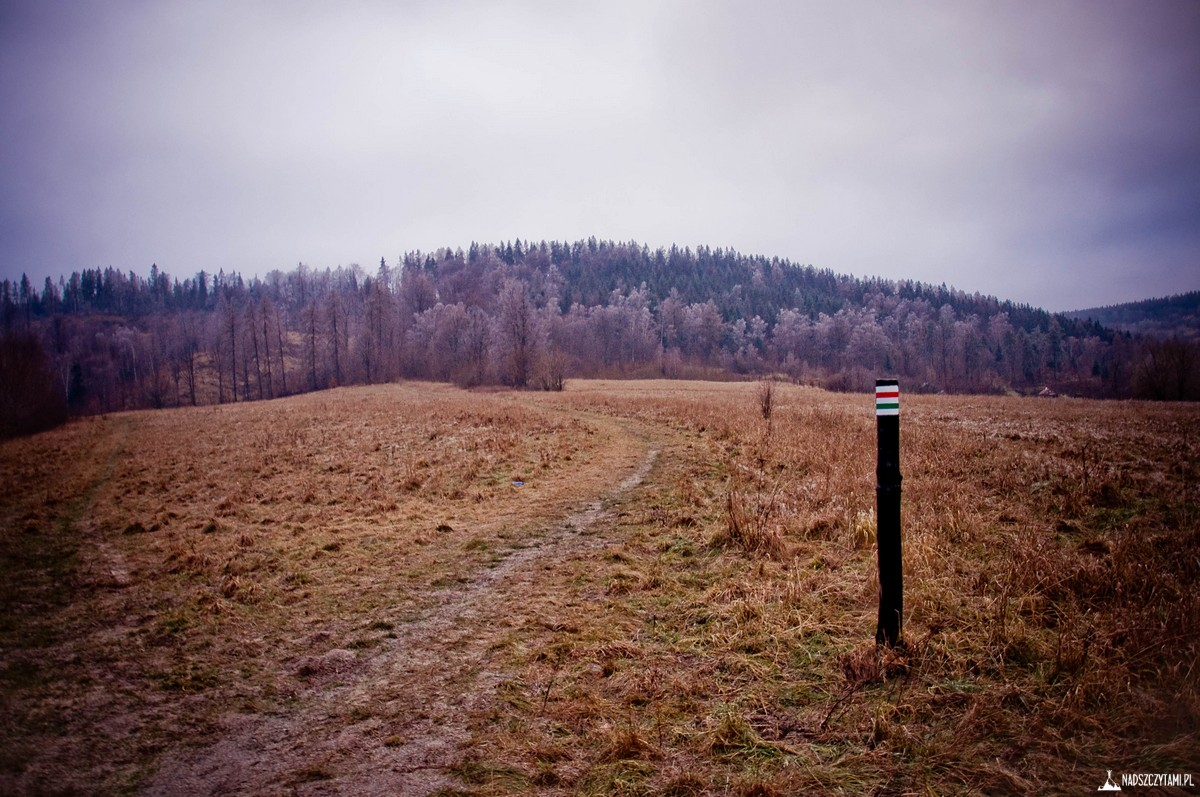 trasa borowa