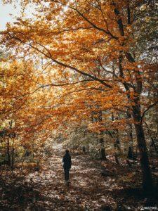 Jesienna Ślęża przez Wieżyce