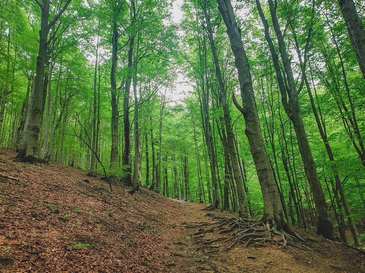 Las Bukowy Bieszczady