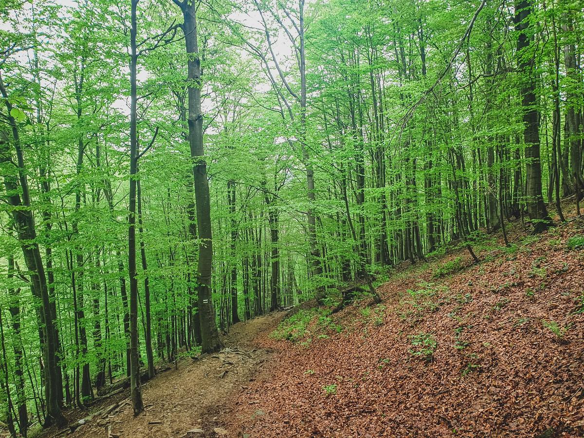Mała i Wielka Rawka Bieszczady Las Bukowy