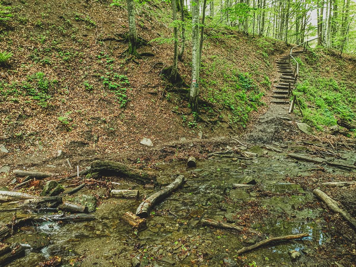 Piękny las - droga z połoniny caryńskiej