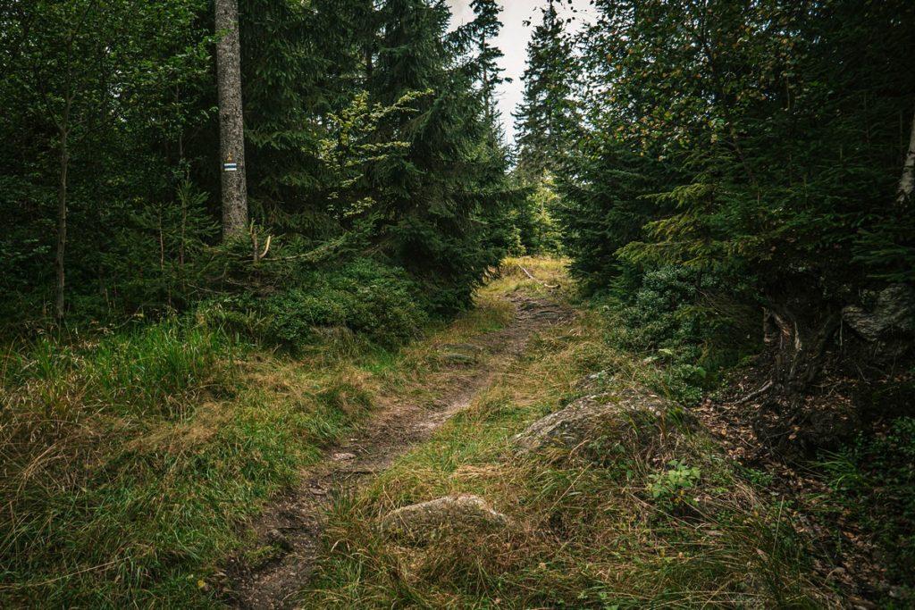 Szlak na szczyt Jagodna