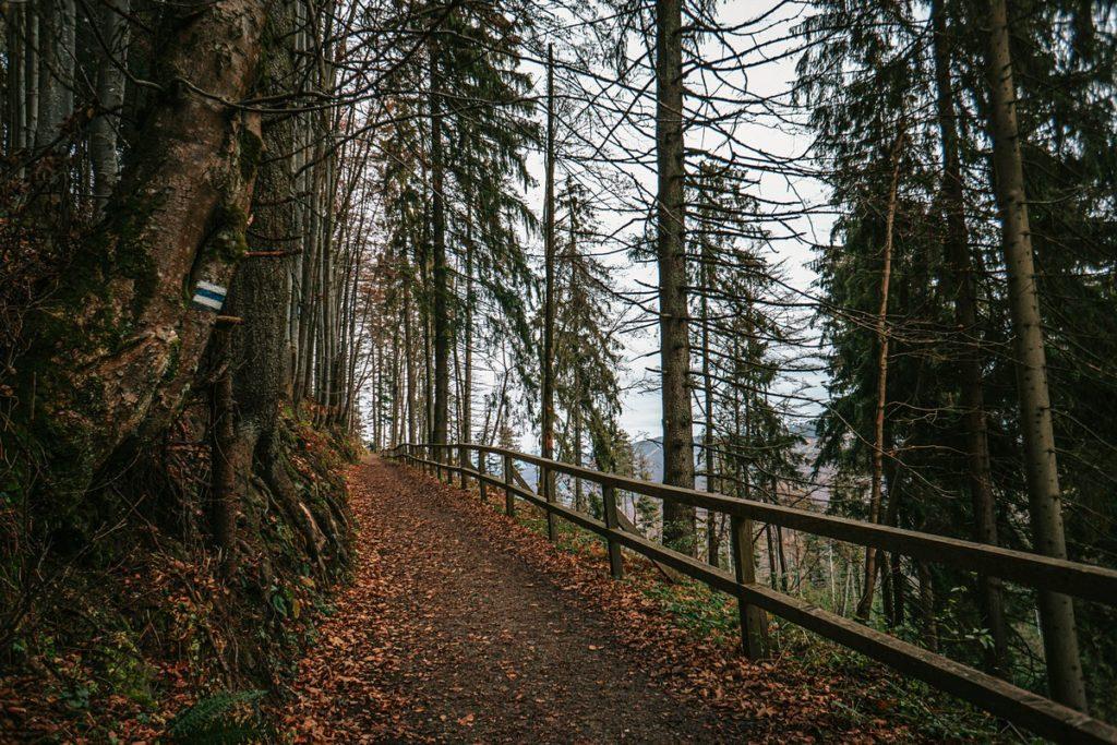 Szlak niebieski do Schroniska PTTK Markowe Szczawiny