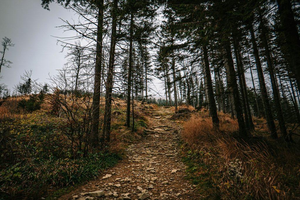 Beskid Śląski - najwyższy szczyt trasa