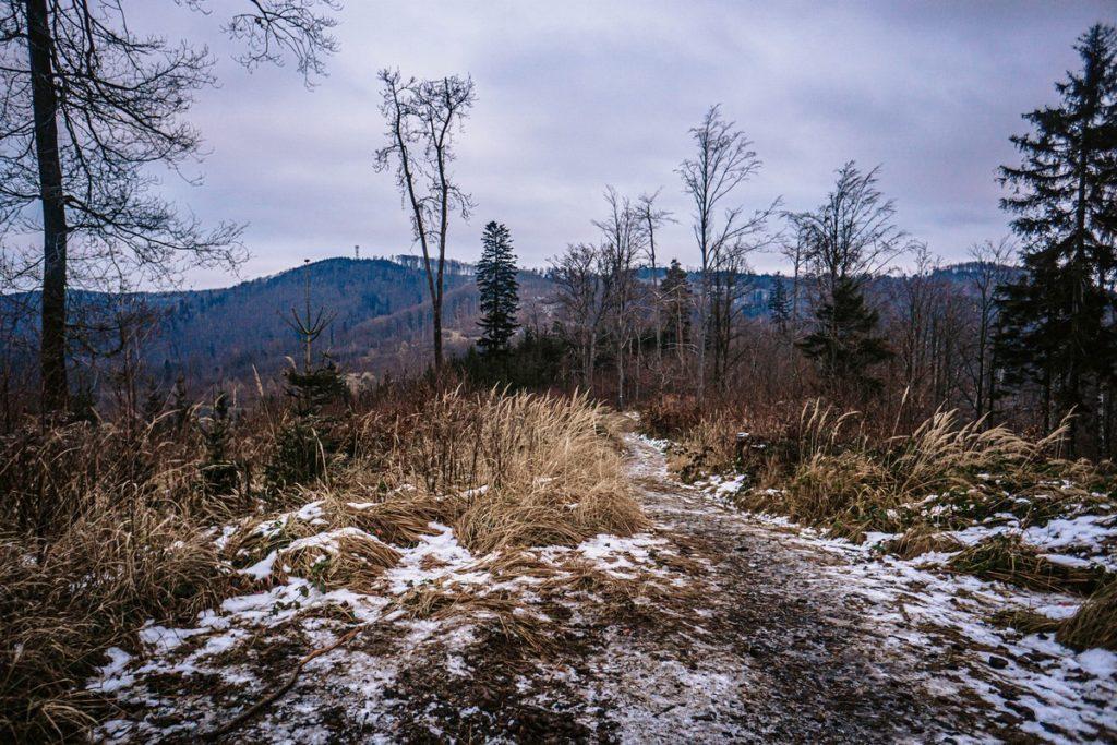 Jedlak - widok na Wieżę na Kłodzkiej Górze